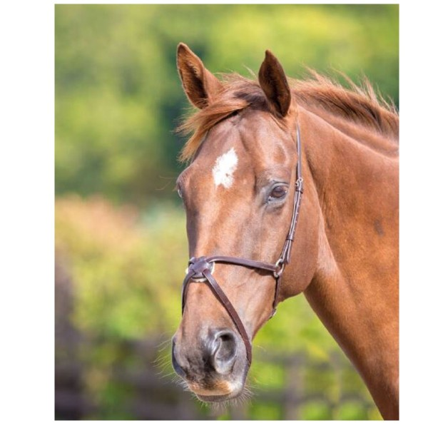 Shires Blenheim Leather Mexican Noseband