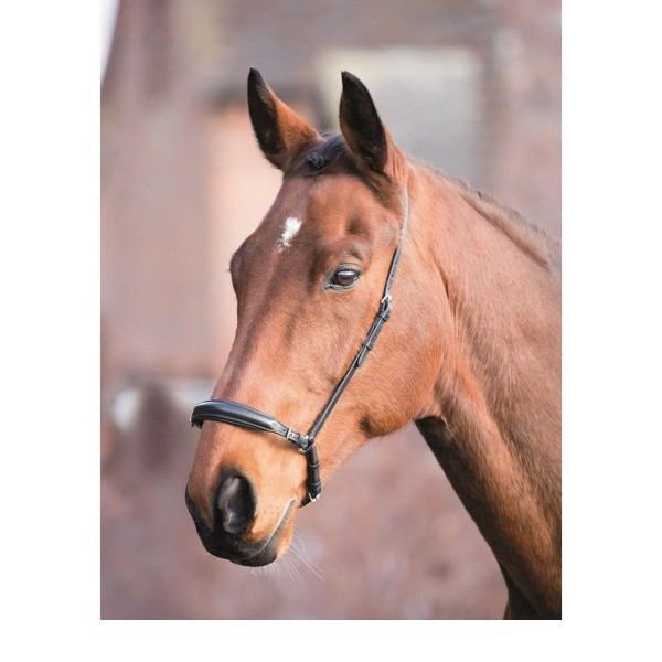 Shires Aviemore Leather Drop Noseband